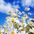 مجموعه 16 تصویر با کیفیت از گلهای قشنگ و زیبا