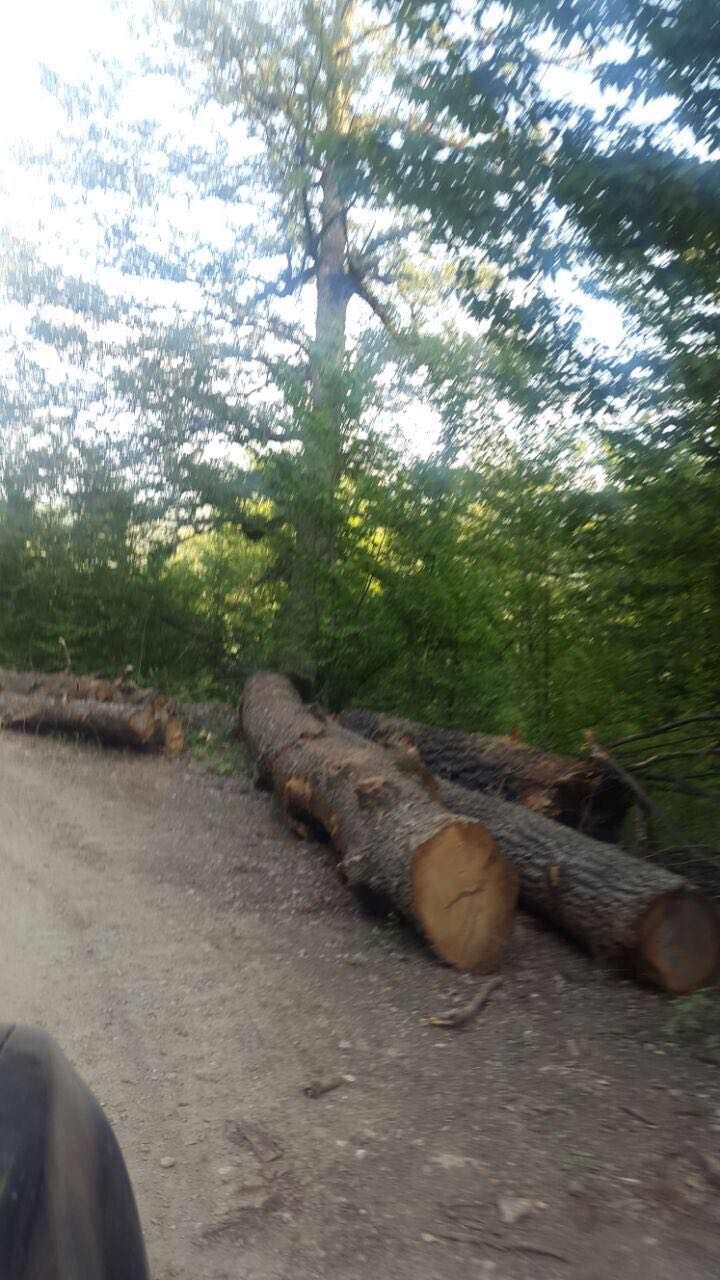 قطع درختان جنگل قلعه موران، استان گلستان