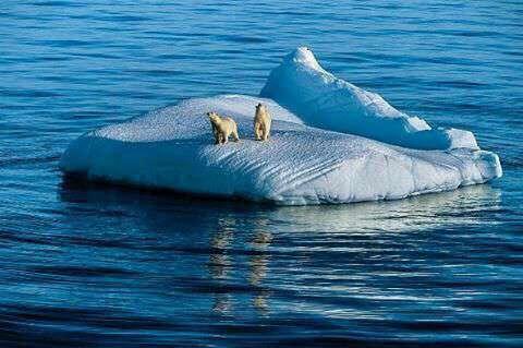 گیر افتادن دو خرس قطبی