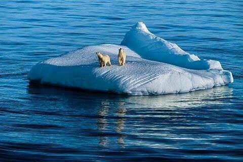 خرس قطبی و بچه دو ساله اش ک روی یک تکه یخ شناور در قطب گیر افتاده اند