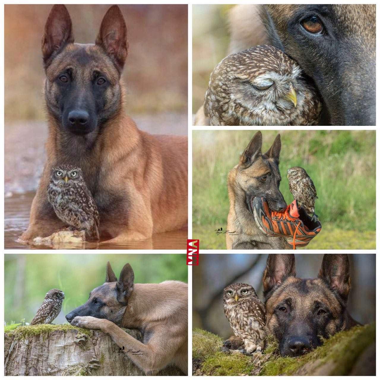 دوستی شگفت انگیز سگ و جغد