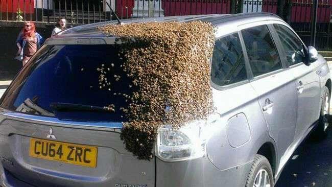 زنبور های ماشین دوست