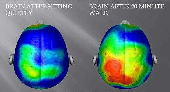 فعالیت مغز بعد از ۲۰ دقیقه پیاده روی
