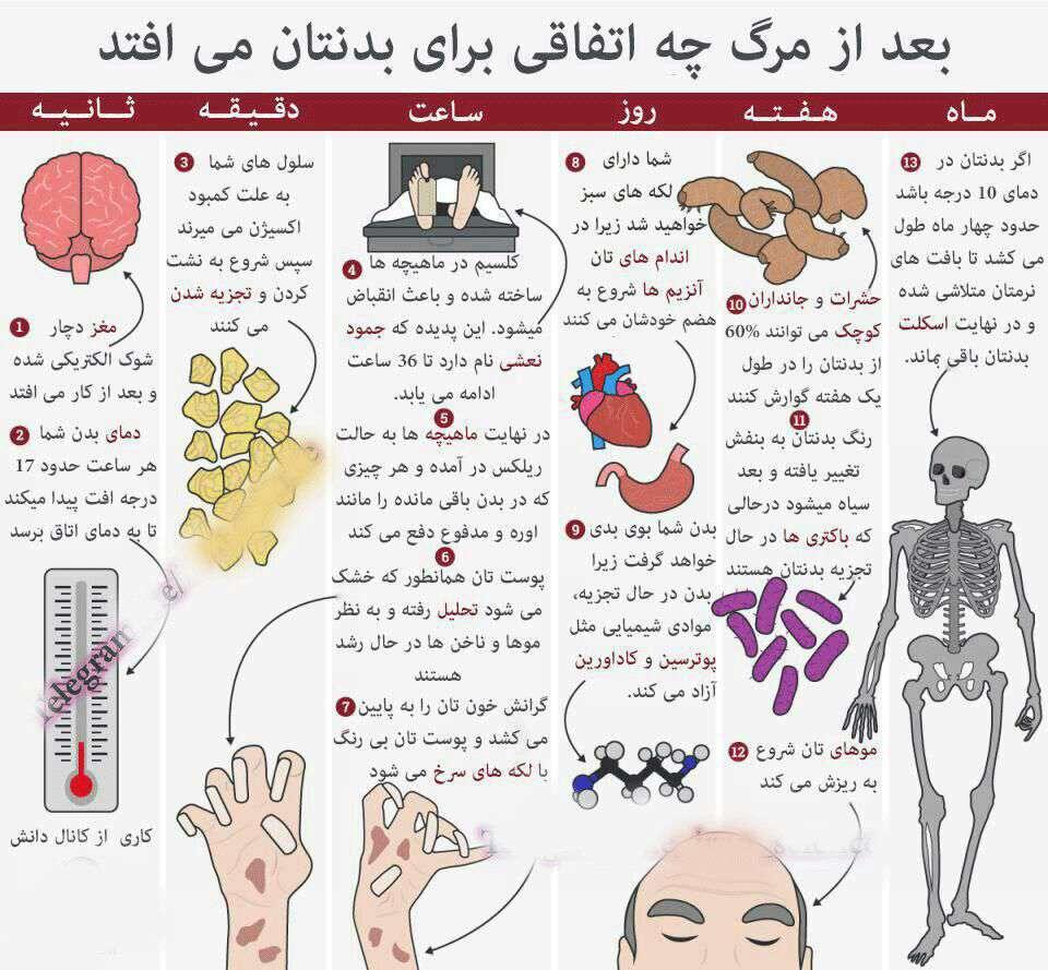 بعد از مرگ چه اتفاقی برای بدنتان می افتد؟؟!
