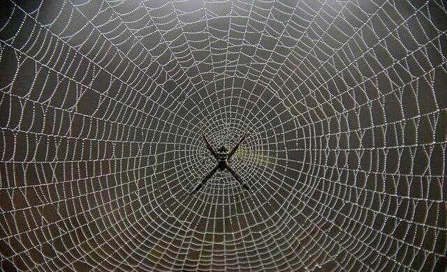 ضخامت تار عنکبوت