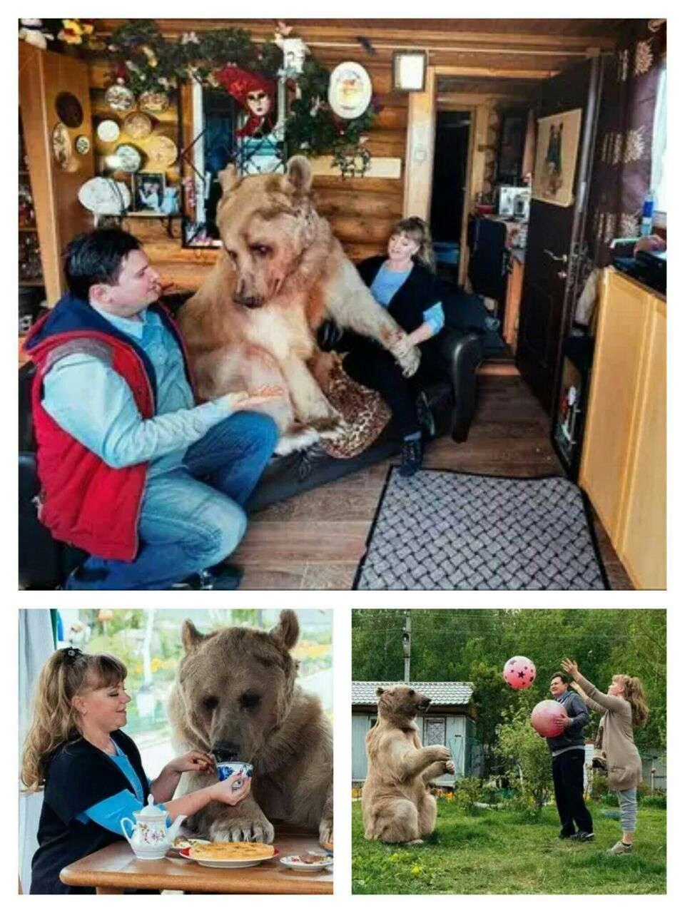 عکس مستند/ این زوج روسی دوستدار محیط زیست، 23 سال با این خرس زندگی میکنند و با وجود این که این موجود ذاتاً یک موجود غیر اهلی است هیچگاه در رابطه دوستانهشان مشکلی بهوجود نیامده