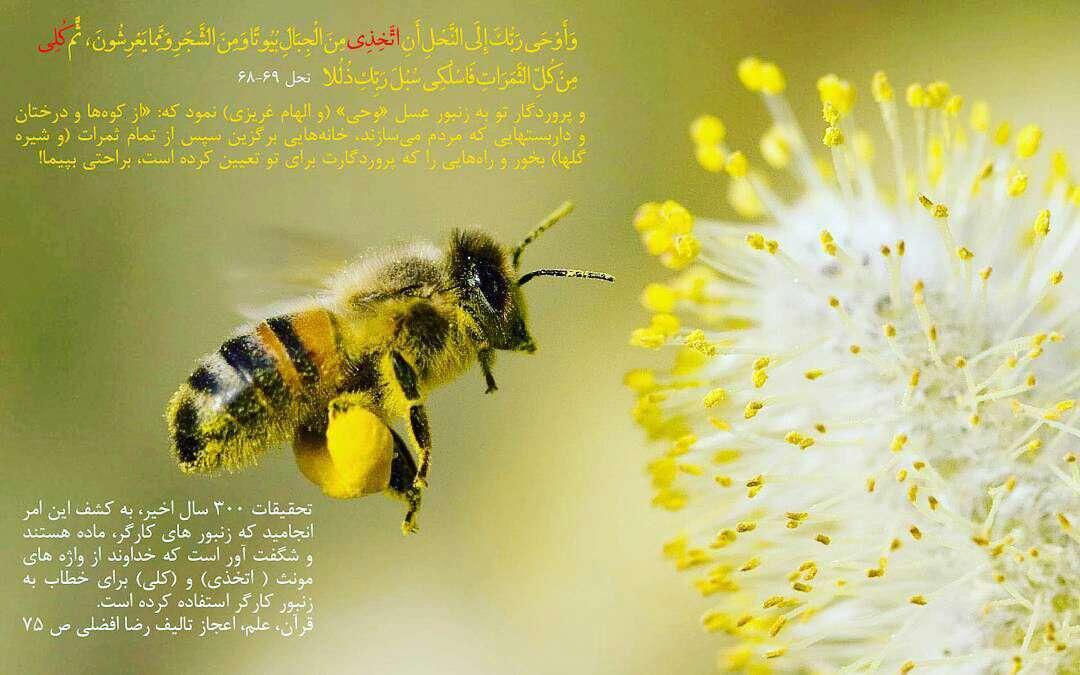اعجازی از قرآن درباره زنبور عسل