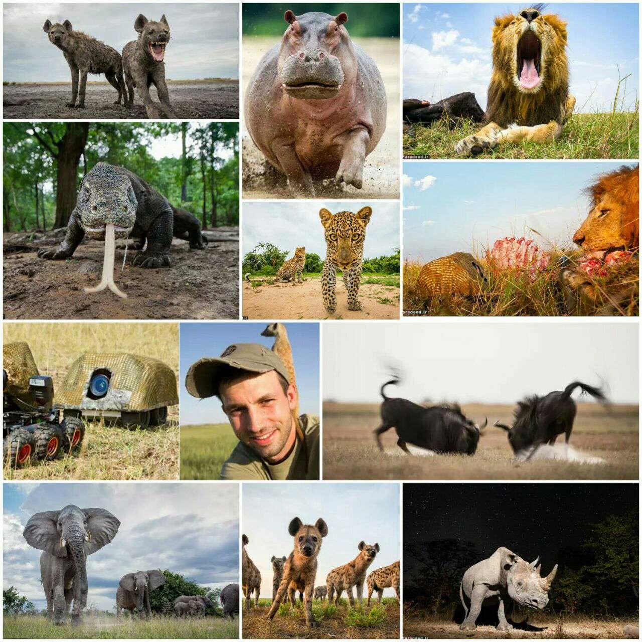 عکس مستند/ حیات وحش از زاویهای متفاوت