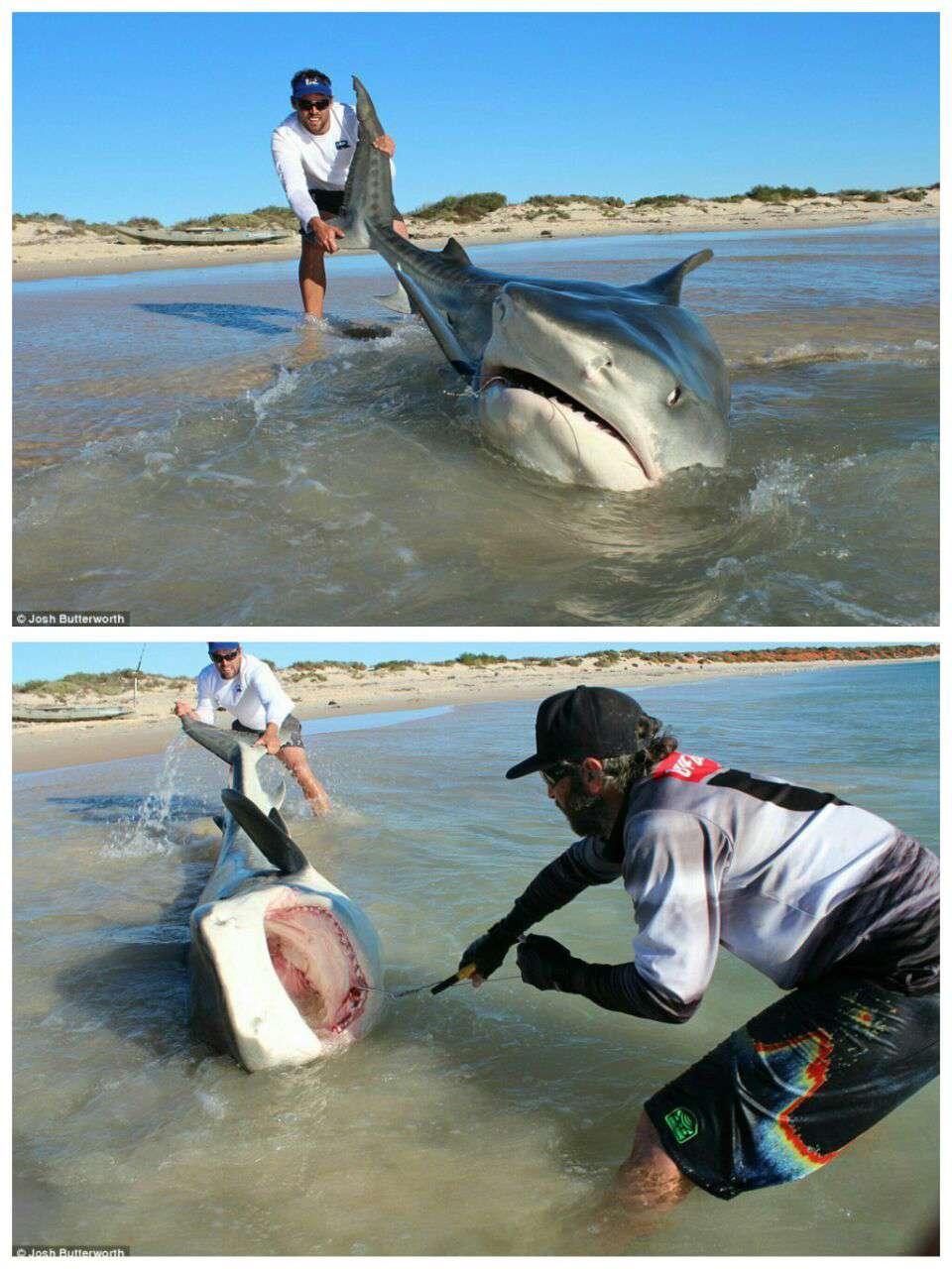دو ماهیگیر شجاع در سواحل استرالیا یک کوسه بزرگ صید کردند