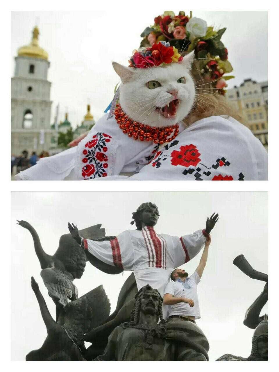 پوشاندن لباس های سنتی اوکراینی به گربه در جریان یک جشن ملی در میدان صوفیه کی یف
