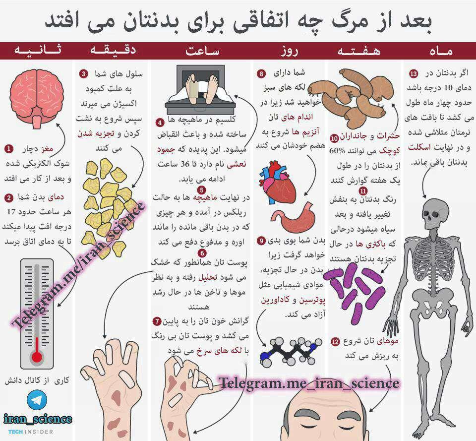 بعد از مرگ چه اتفاقی برای بدنتان خواهد افتاد؟