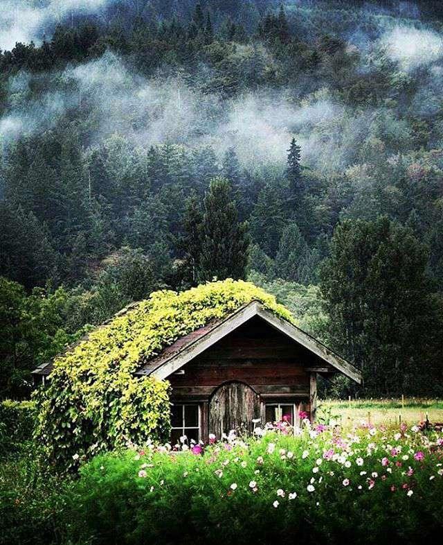 کلبه ای میان طبیعت سبز