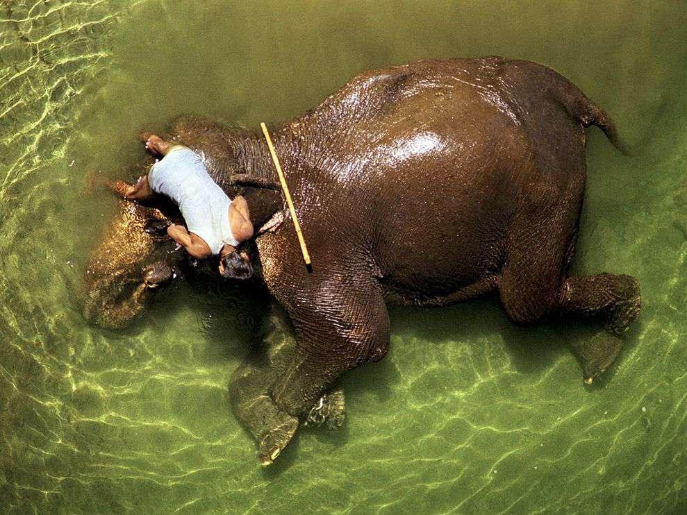 حمام عاشقانه فیل بهدست فیلبان/ هند