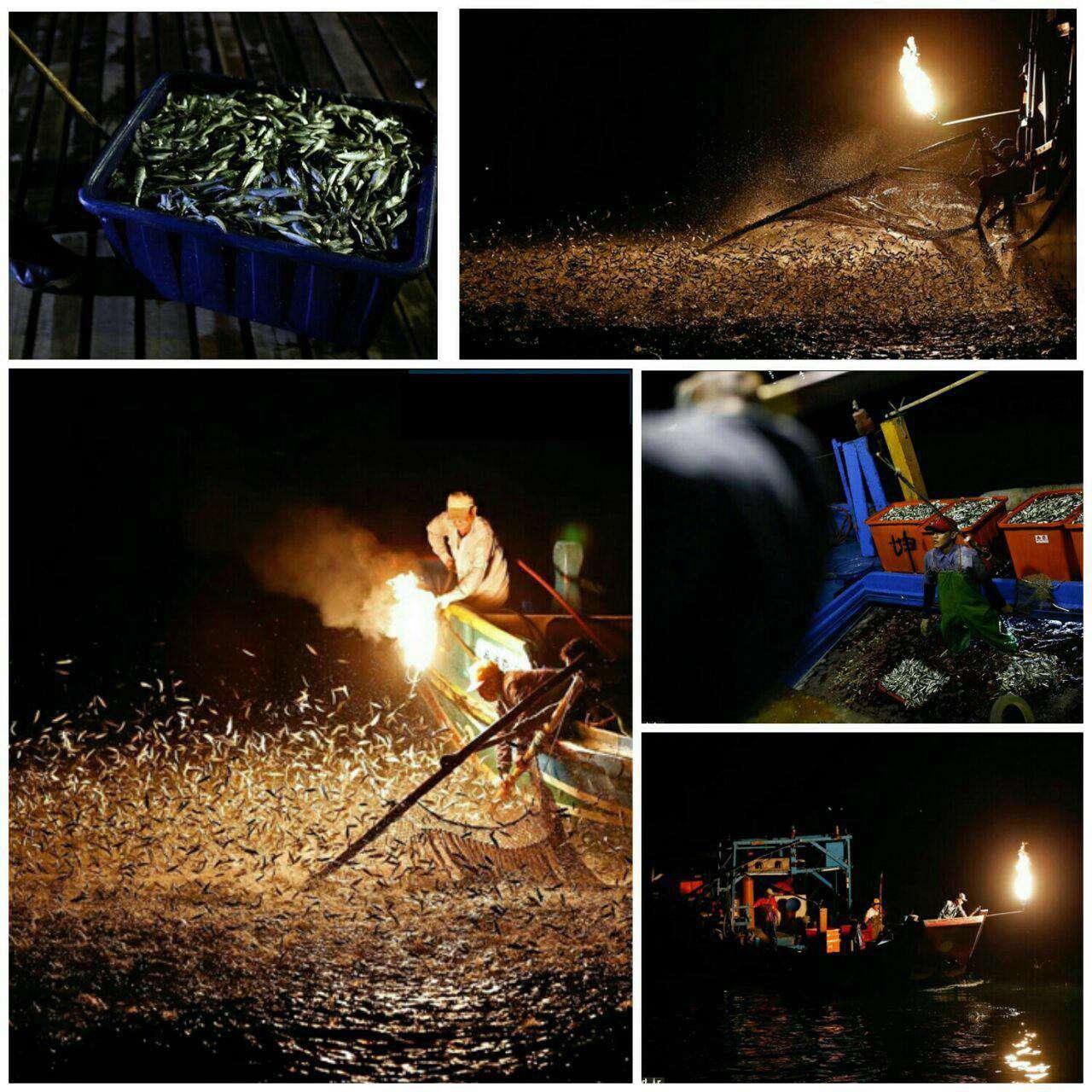 عکس مستند/ صید ماهی با شعلههای آتش!