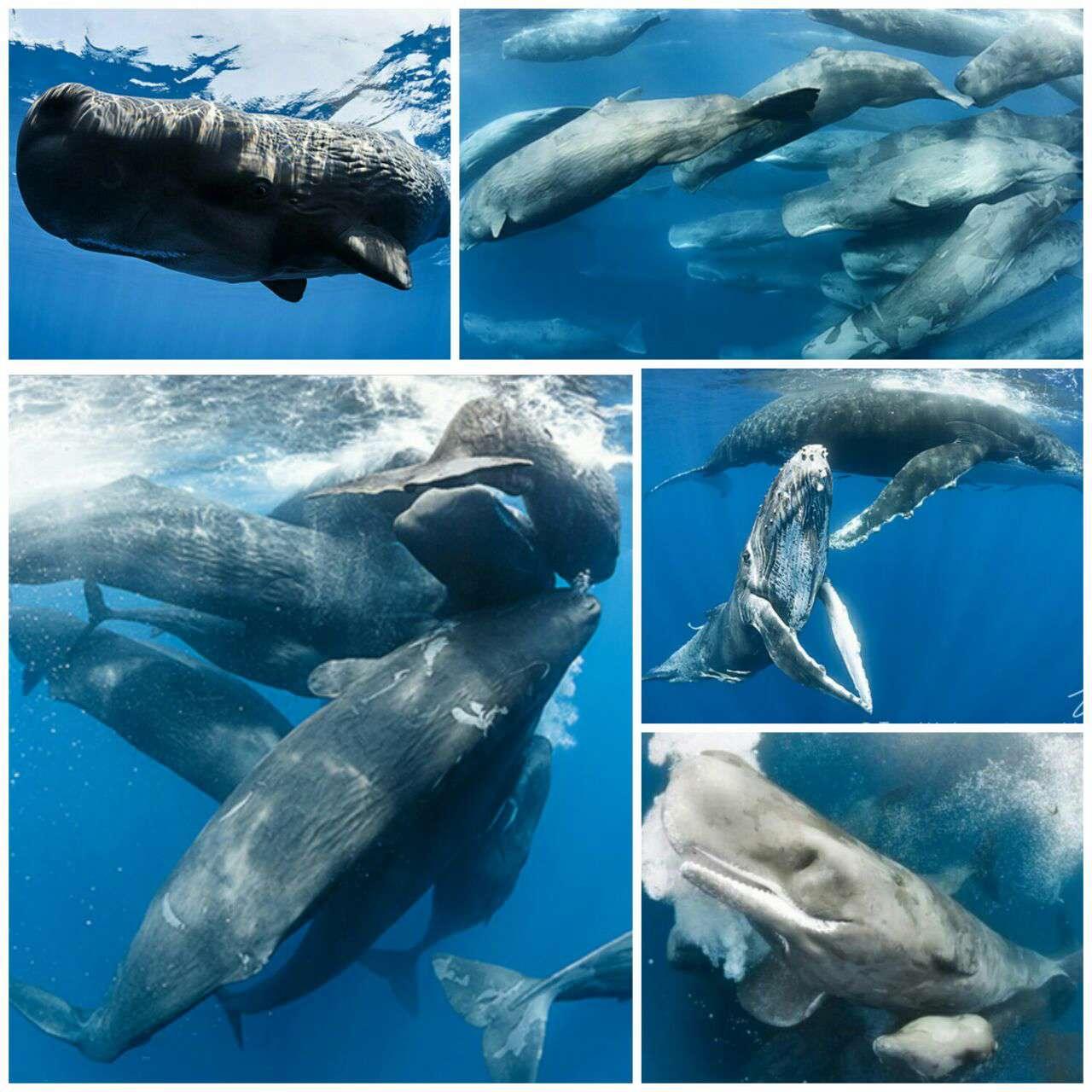 جمع شدن نهنگها در اقیانوس هند