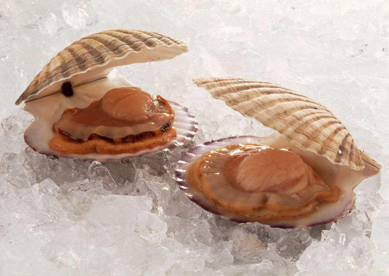 صدف های خوراکی ازبدوتولدنر هستند بعضی از آنها وقتی به دوره بلوغ نزدیک میشوند،جنسیت خودرا تغییر داده و ماده میشوند.
