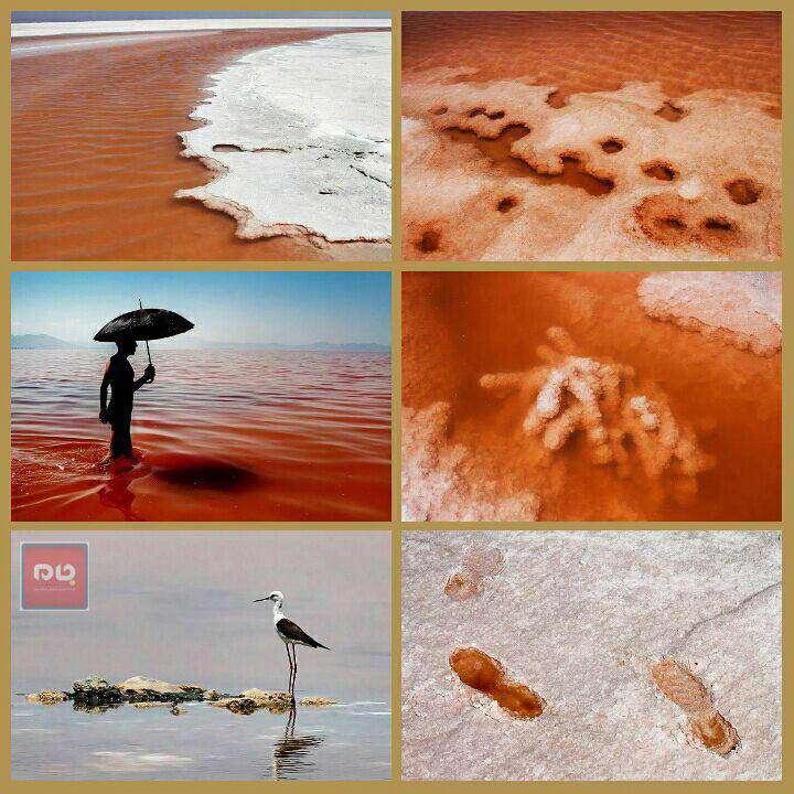 روزهای سرخ دریاچه ارومیه  آرتمیا و جلبک در دریاچه آغاز به رشد داشته و قرمز شدن دریاچه نیز میتواند به دلیل وجود آرتمیا در منطقه و دریاچه باشد.