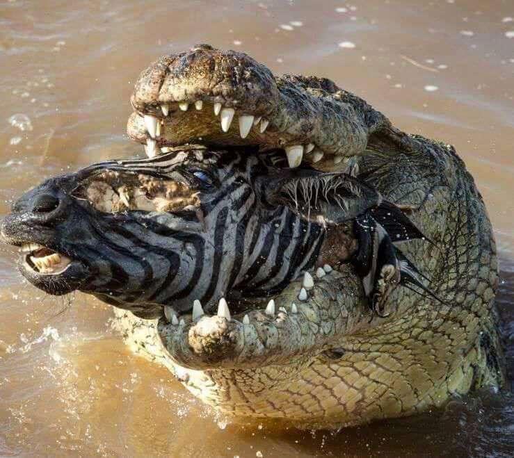 تصویر استثنایی از حیات وحش