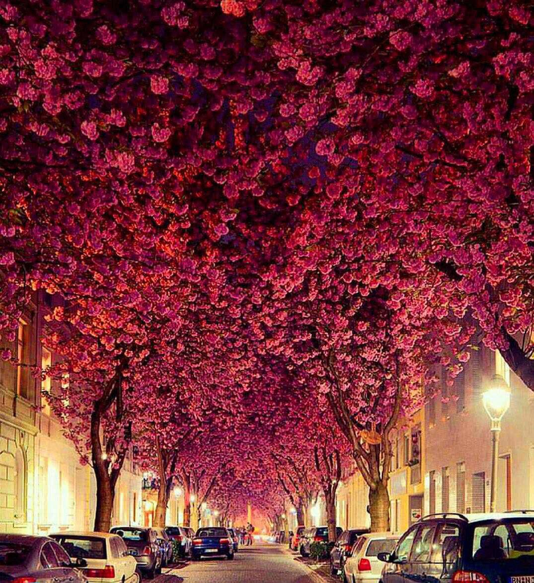 """خیابانی در کشور آلمان که به """"تونل رویایی"""" مشهور است"""
