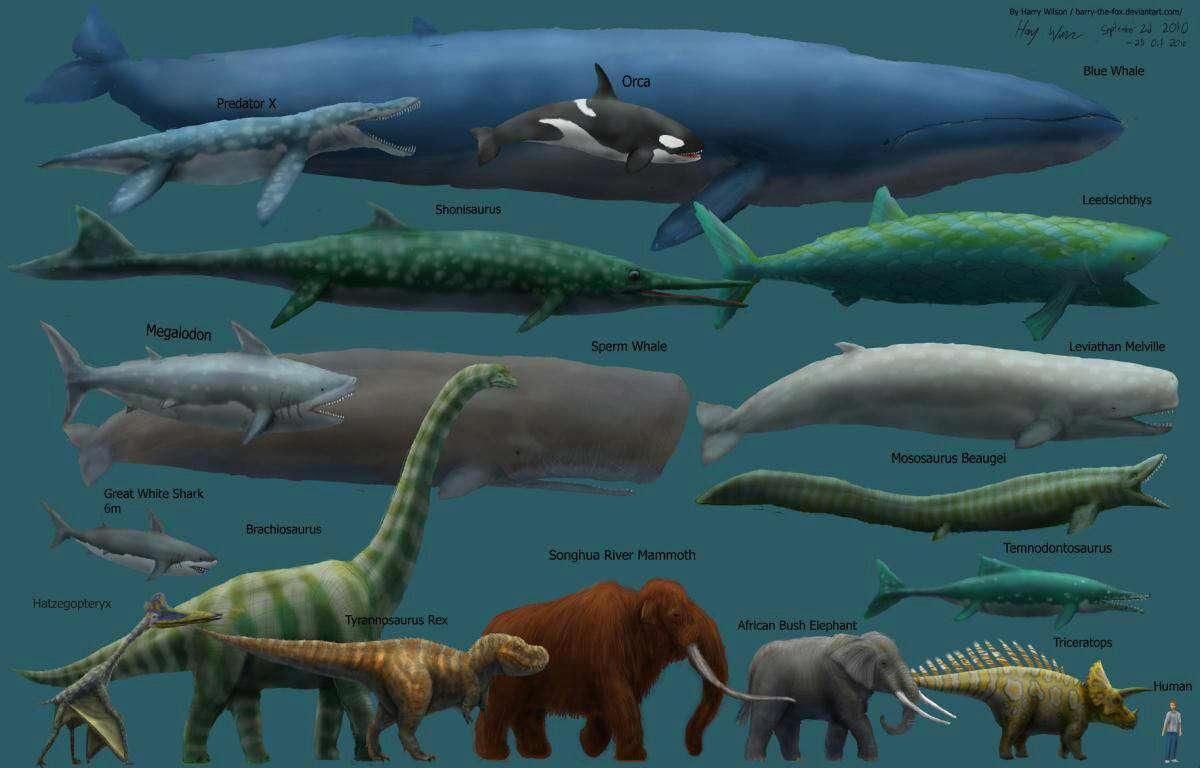 آیا میدانستید بزرگترین حیوان در طول تاریخ زمین نهنگ آبی است که هم اکنون نیز منقرض نشده و به حیات خود ادامه میدهد؟