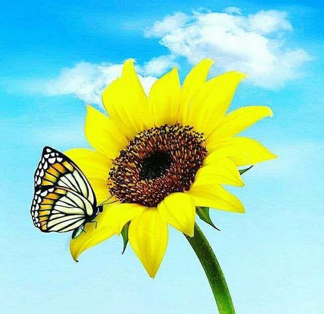 پروانه ای روی گل
