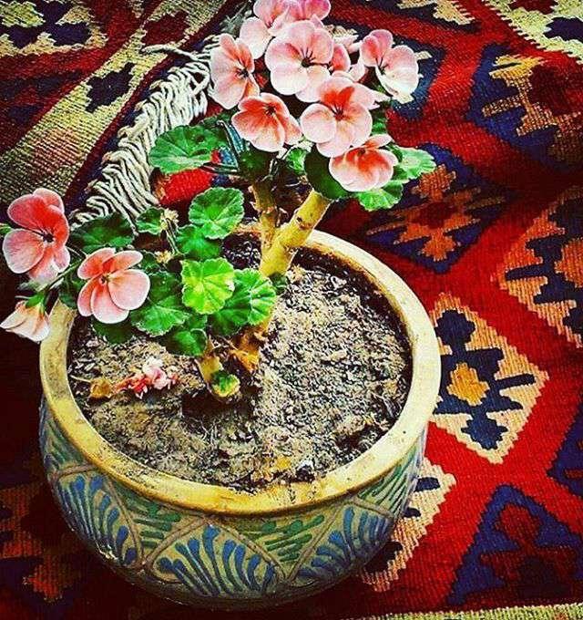 گلدان زیبا