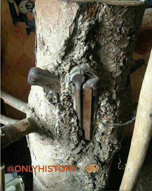 مخفیگاه اسلحه یک سرباز آلمانی که  اسلحه او جزیی از درخت شد ...