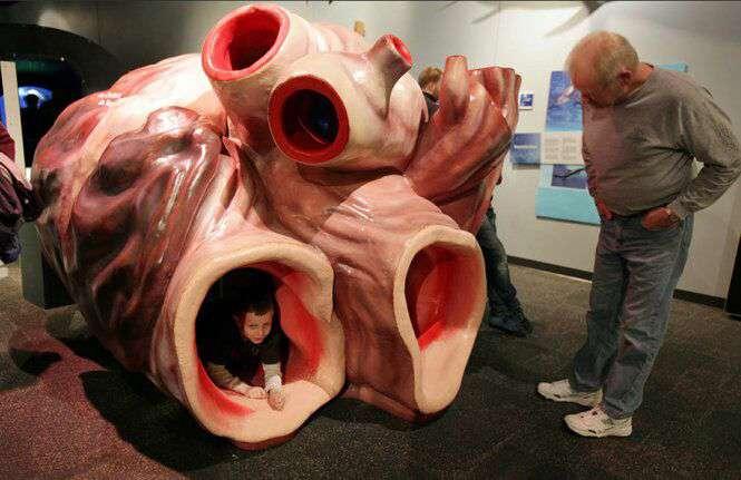 قلب نهنگ آبی در حدود ۶۰۰kg وزن دارد، در این حد که انسان می تواند از دریچه های آن وارد یا خارج شود