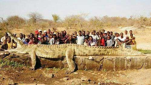 عکسی از یک تمساح غول پیکر در آفریقا