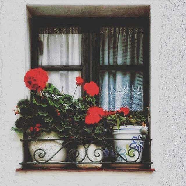 پنجره ای رو به زیبایی