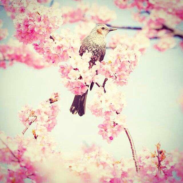 پرنده ای روی شاخه ی پرگل