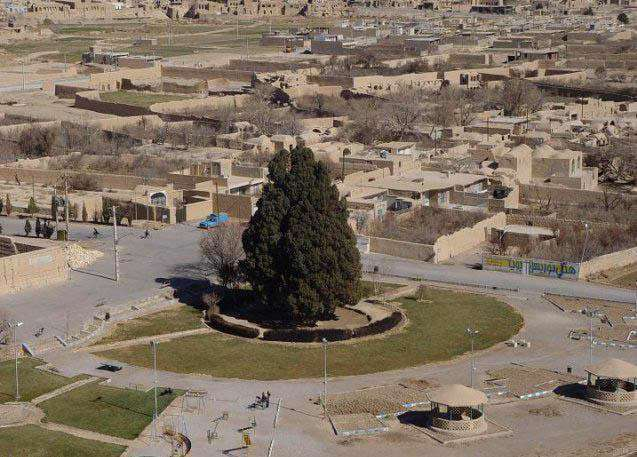 سرو ابرکوه با عمر تقریبی ۴۰۰۰ سال (به گفتی برخی منابع ۲۵۰۰ سال تخمین زدهاند به عنوان پیرترین درخت ایران و احتمالاً آسیا و سومین درخت پیر جهان به حساب میآید.