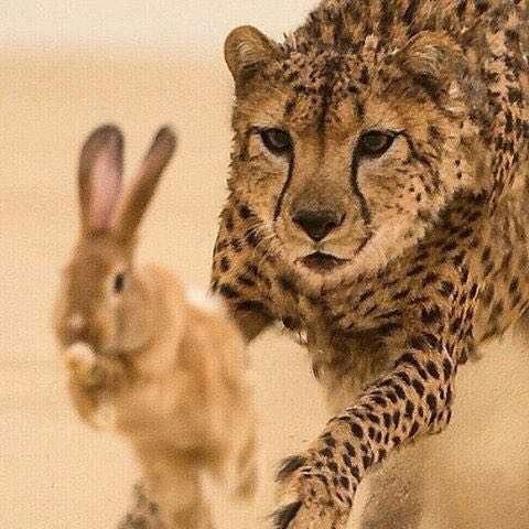تصویری زیبا از دنیای حیوانات
