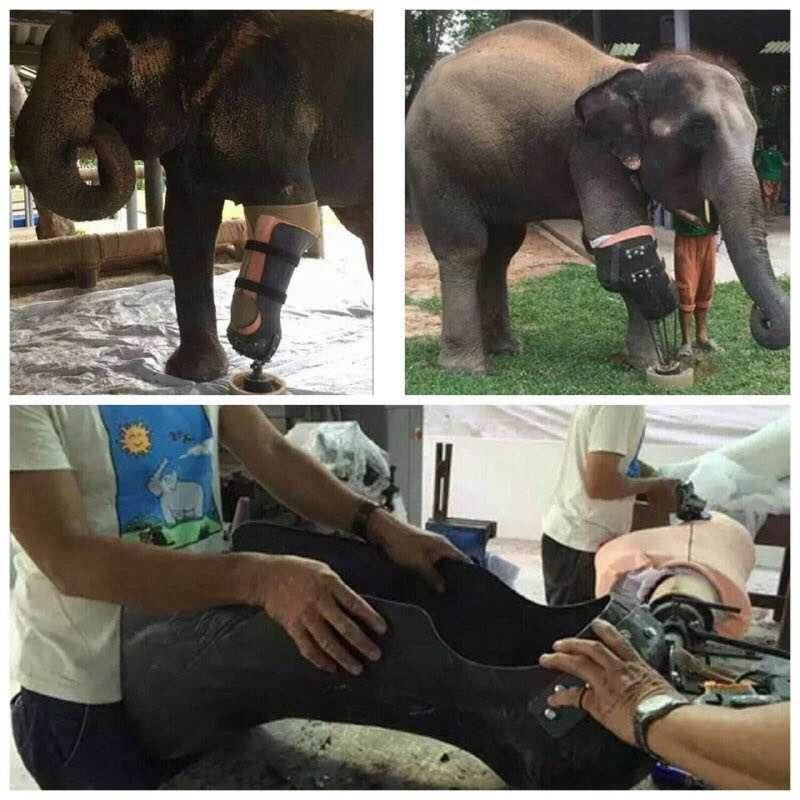 اولین فیل جهان با پای مصنوعی قادر به راه رفتن دوباره شد جراح تایلندی برای فیلی که پایش را در انفجار مین از دست داده بود پای مصنوعی ساخت تا اولین فیل در جهان با پای مصنوعی باشد