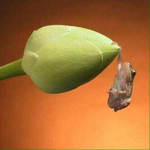 صحنه ی زیبای آویزان شدن قورباغه بر روی گل