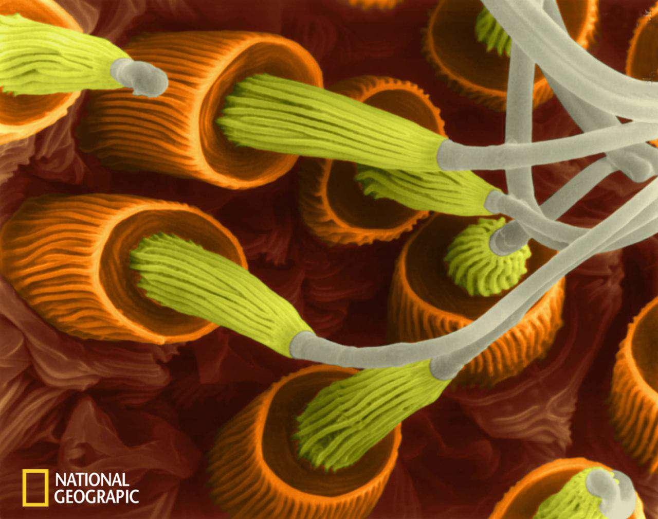 تارهای عنکبوت زیر میکروسکوپ