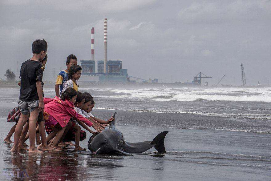 تلاش کودکانه برای نجات جان دلفین زخمی