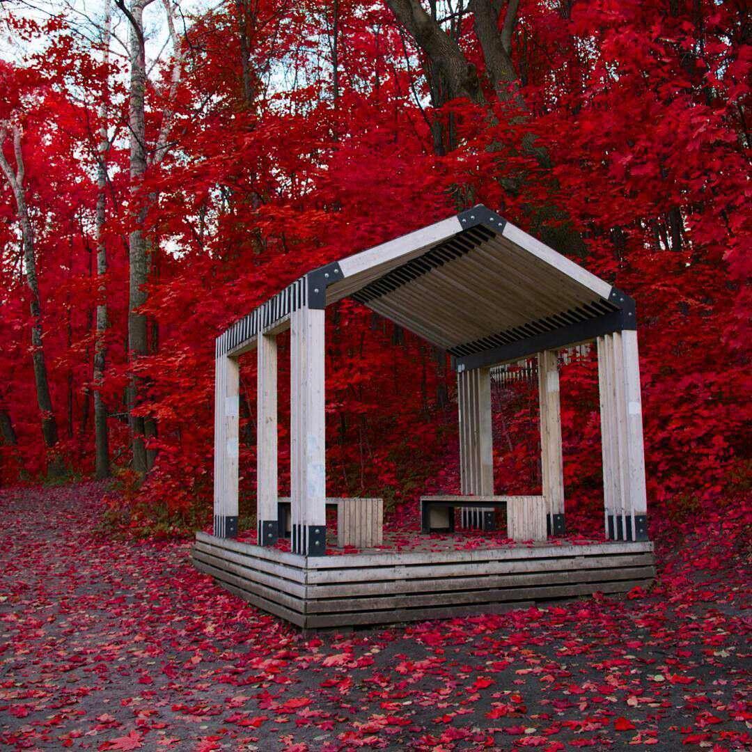 آلاچیقی میان درختان قرمز
