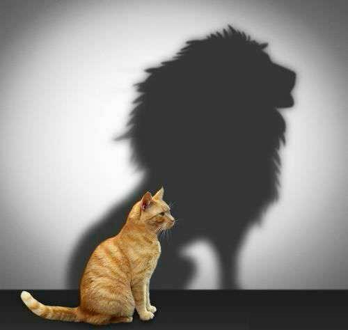 شجاع باش حتی اگر نیستی