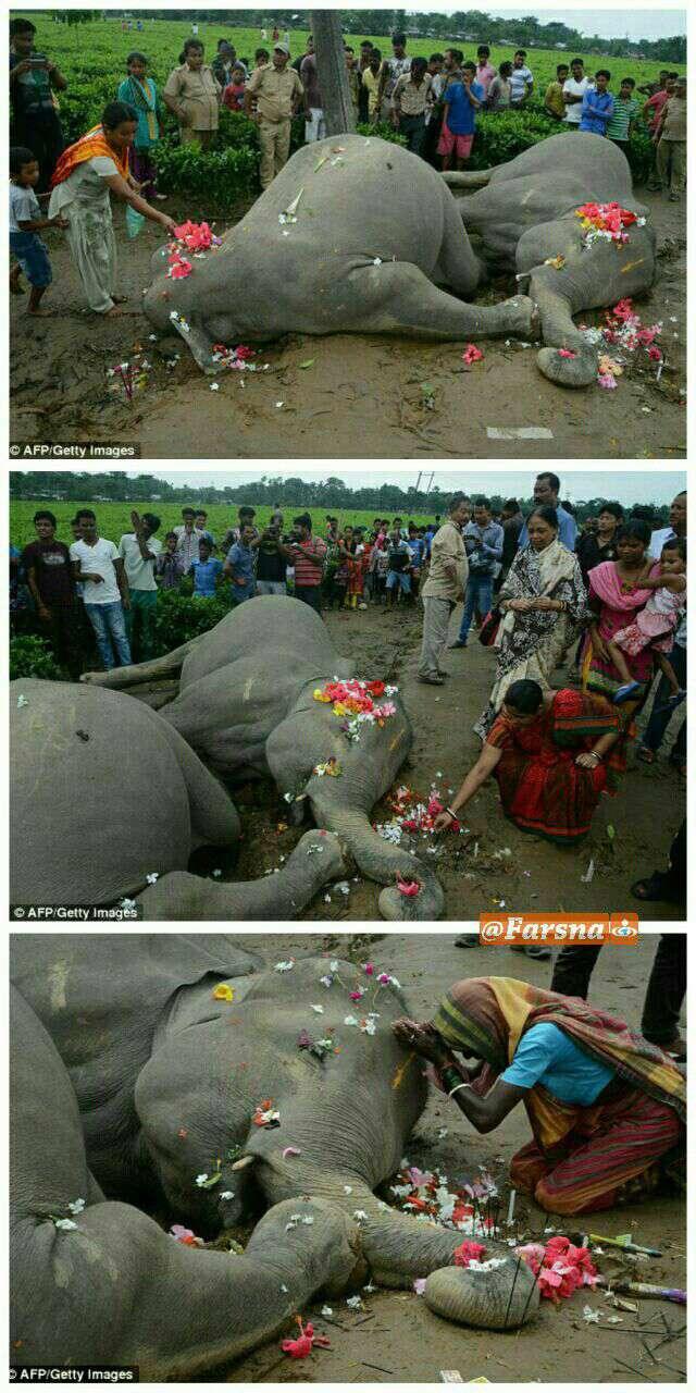 مرگ غمانگیز فیل مادر و بچهاش