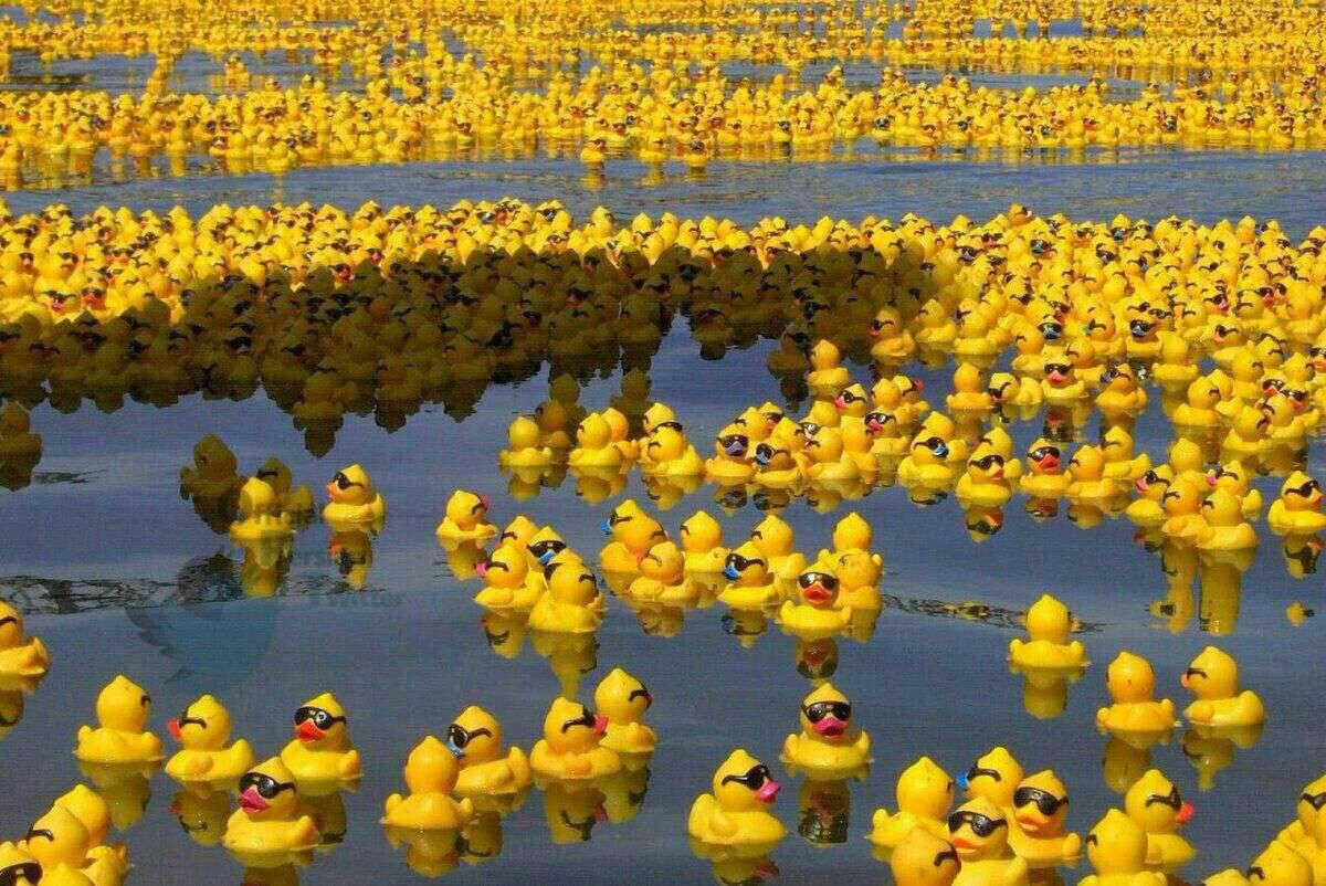 """پس از اینکه کشتی حامل ۳۰ هزار اسباب بازی در اقیانوس واژگون شد، این منظره را به وجود آورد. """"دریایی پر از جوجه اردک های زرد"""