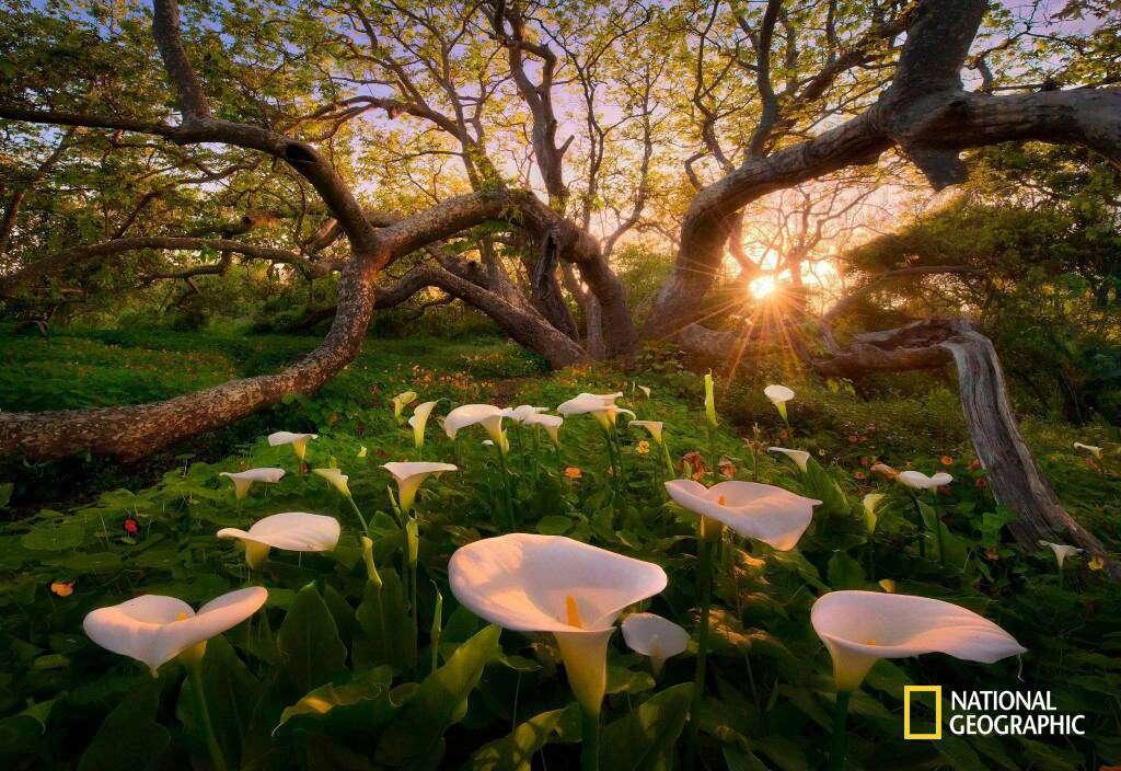 نمایی زیبا از جنگل آمازون