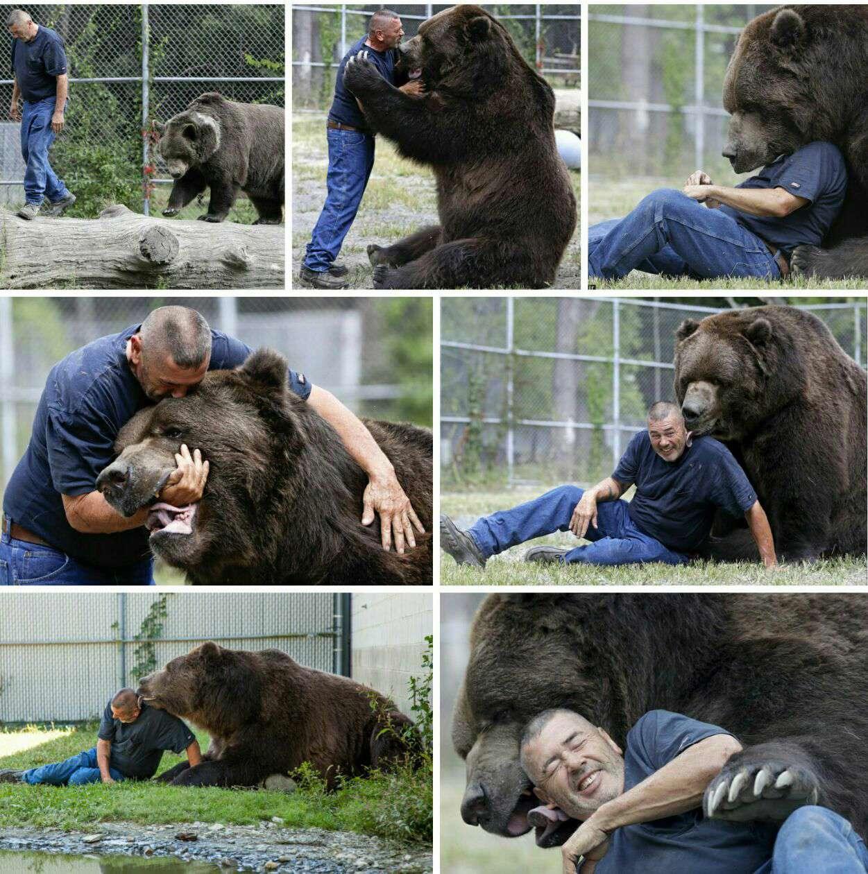 """دوستی صمیمانه مرد و خرس غولپیکر  رابطه صمیمانه """"جیم"""" و یک خرس غول پیکر ۸۰۰ کیلوگرمی به نام """"جیمبو"""" تصاویر باورنکردنی خلق کرده است"""