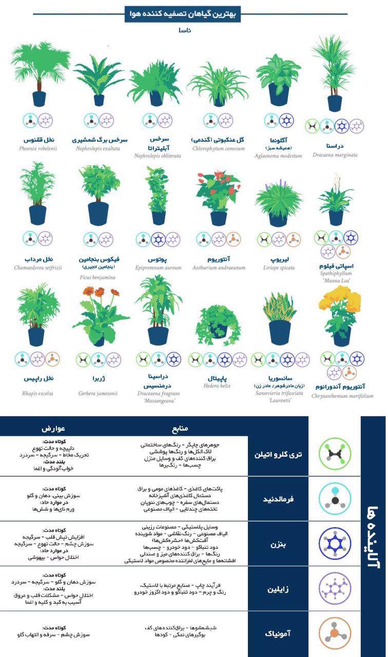 گیاهانی که هوای آلوده خانه را تصفیه می کند