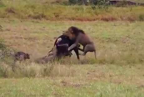 صحنه دلخراش در حیات وحش