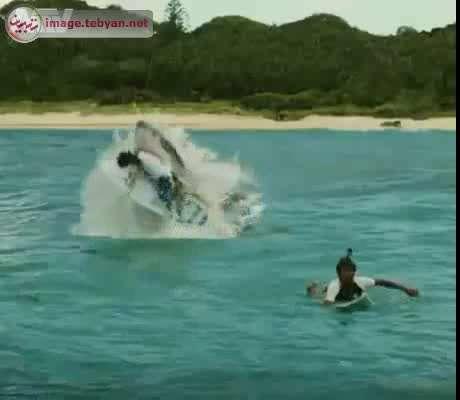 لحظه بلعیده شدن یک مرد در دریا توسط کوسه