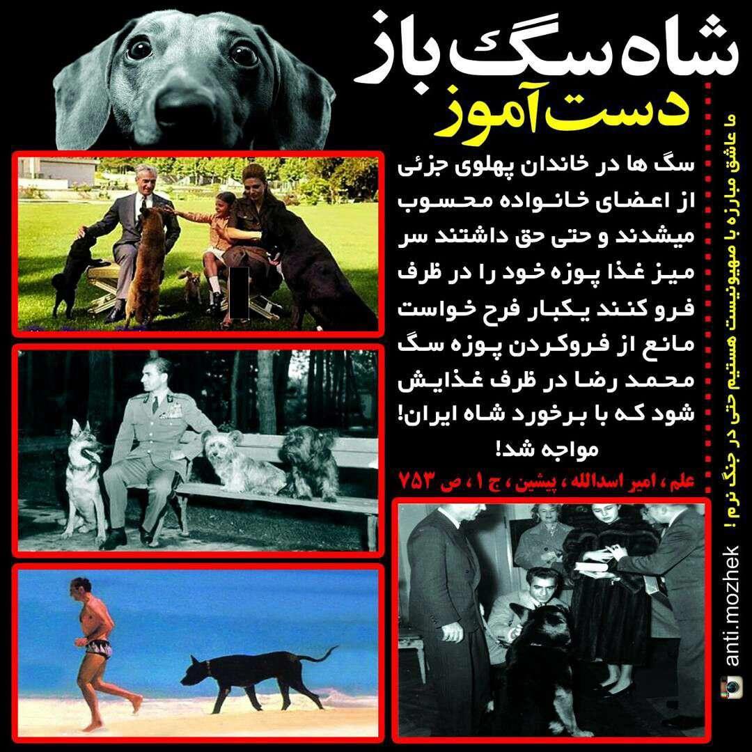 شاه سگ باز