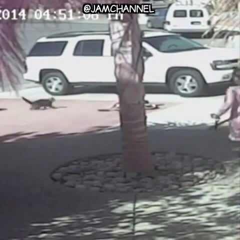 حمله یک سگ به کودک و نجات توسط گربه!