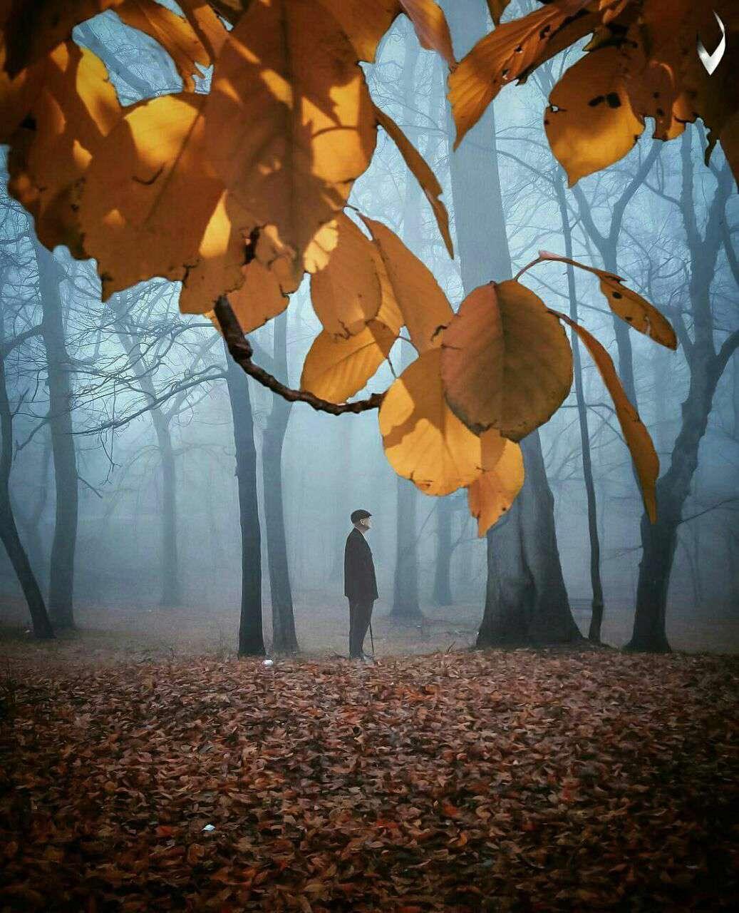 پیرمرد تنها در جنگل