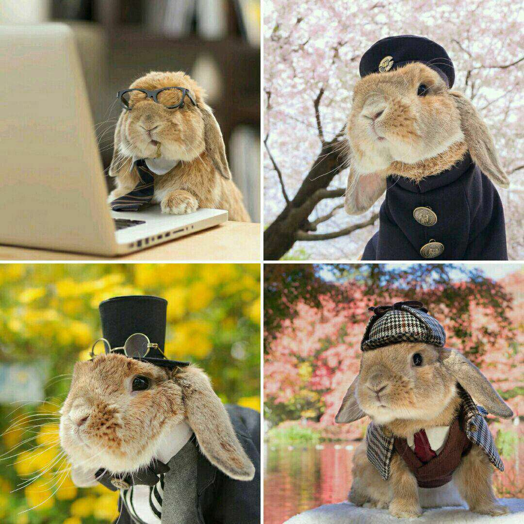 """""""پيتر"""" خرگوش نري است که افتخار خوشتيپ ترين حيوان جهان نصيب اش شده است .اودر مراسمي که هيات داوران عکس هاي بيش ازهزارحيوان را بررسي مي کردند رای آورد"""